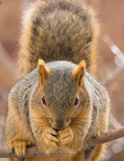 Squirrel--2