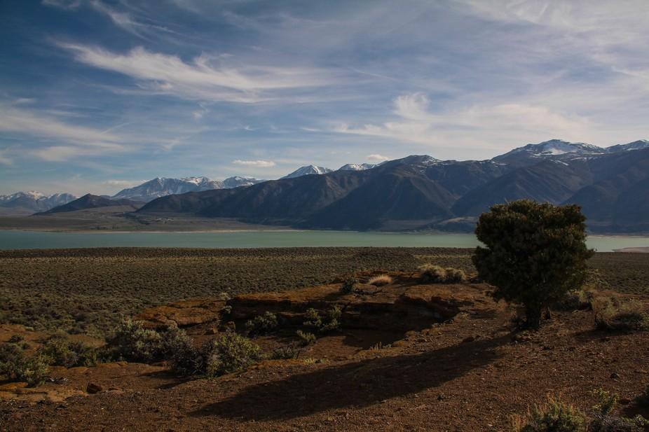 Mono Lake pinon edit