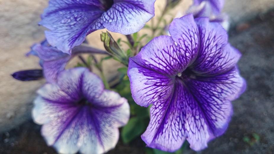 Mom\'s Flower