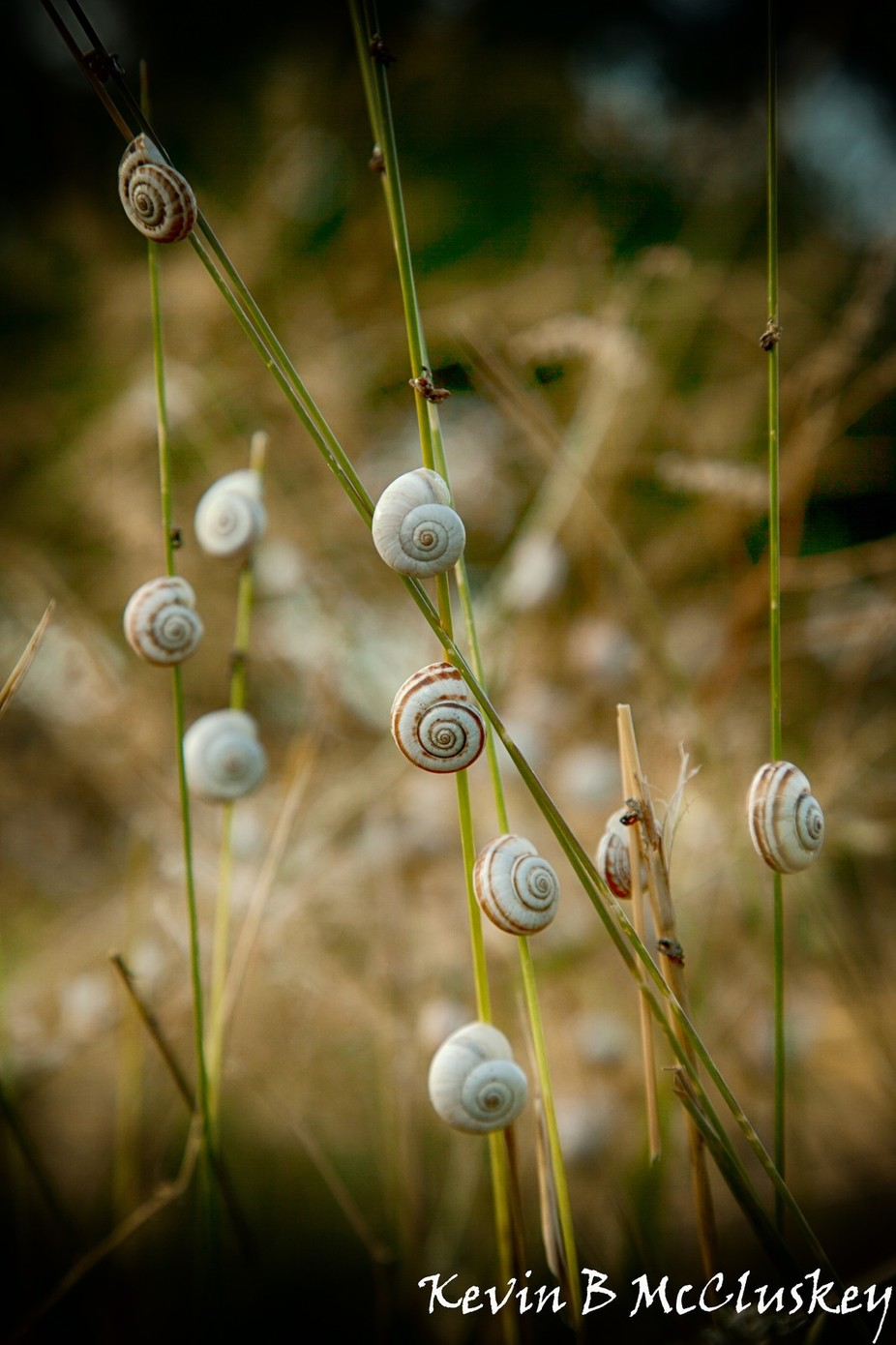 Snails in the Feild by Kevin-B-McCluskey - Depth In Nature Photo Contest