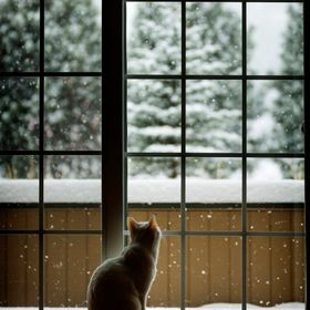 This is my cat looking at snow for the first time. He sat there for about an hour just staring.  Follow me www.Facebook.com/CasaBayPhotography