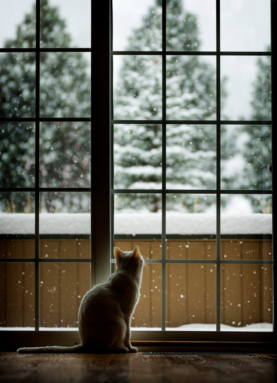First Snow by CasaBay_Photo - Feline Beauty Photo Contest