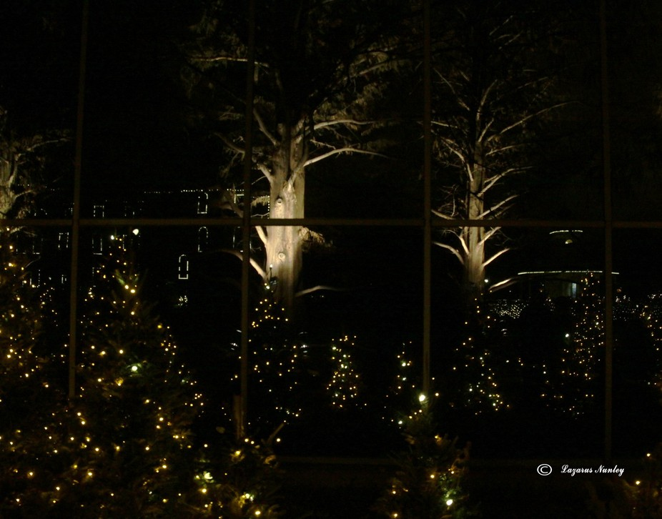 Part of the Garden Glow exhibit at Shaw Botanical Garden - St. louis MO