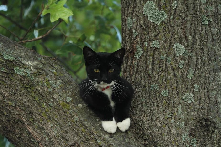 Bogey sitting in tree