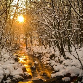 The setting sun turns a small stream golden in the winter forests of Bergen, Norway, December 2014.