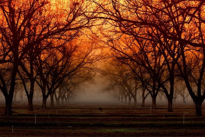 """Tangerine Sunrise"" by Iconoscope - Photos With Filters Photo Contest"