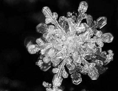 Snowflake_Portrait