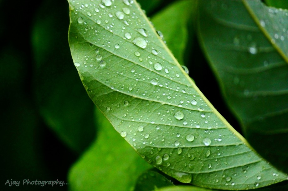 Tiny raindrops caught resting on a leaf !!!