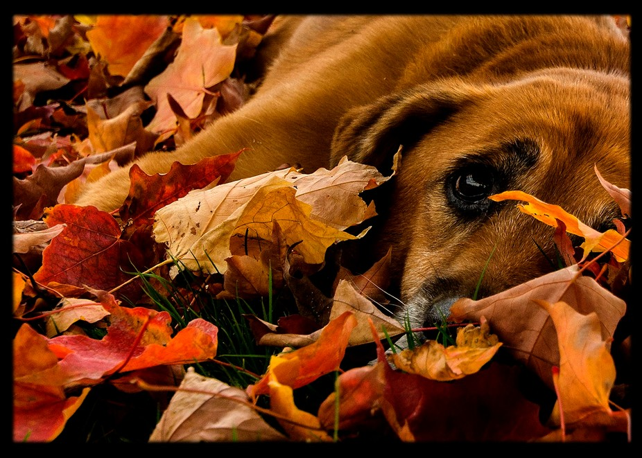 red dog red leaves
