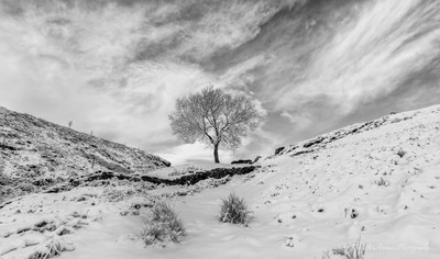 Lone tree in the snow