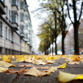 The leaves fall in Malmo