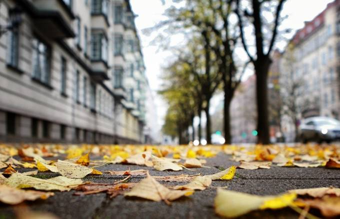 The leaves fall in Malmo by SecaBlue - Below My Knees Photo Contest