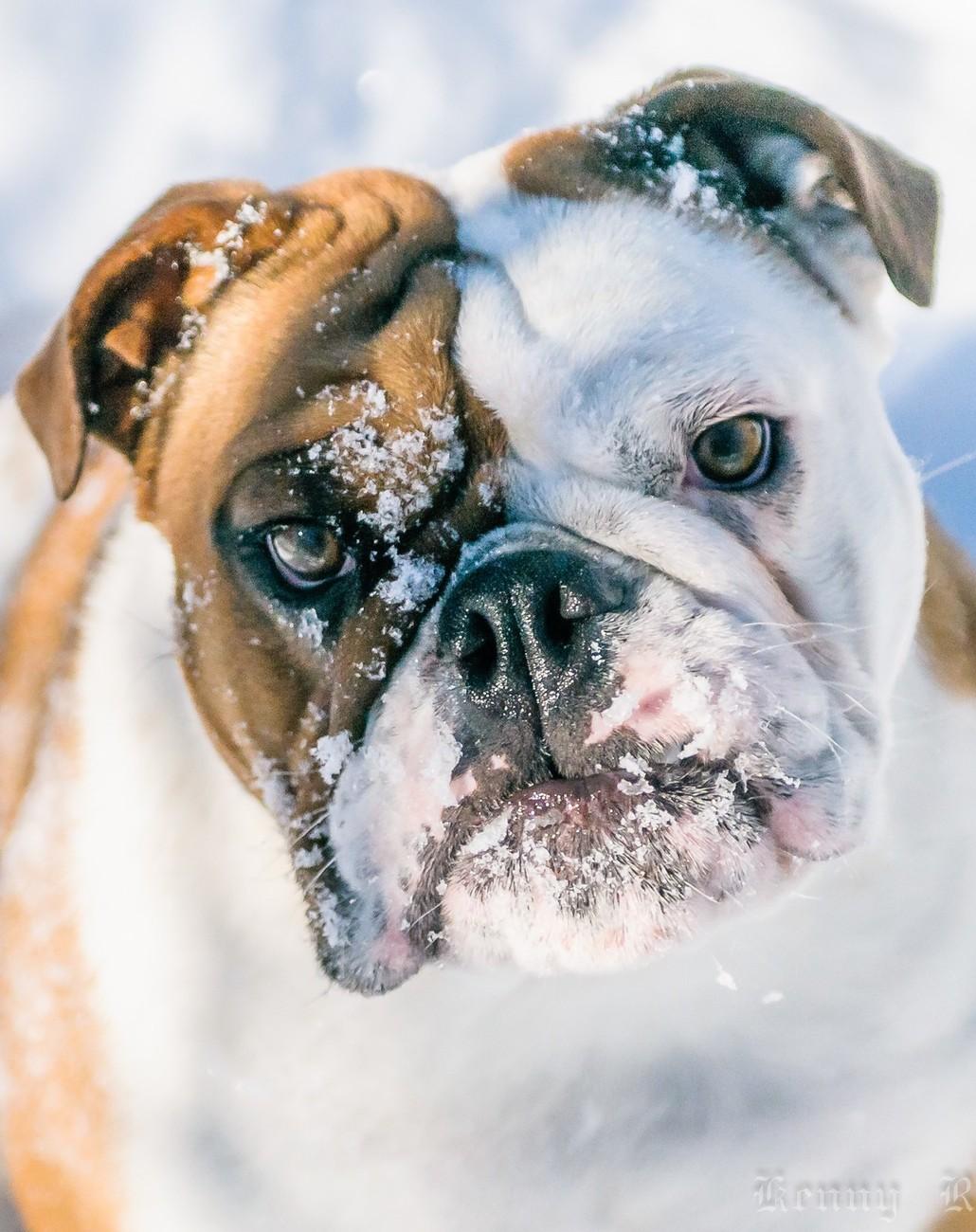 Clover Ann Bully Snow Day-11