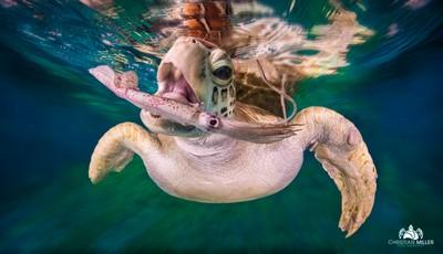 Turtelly Awesome