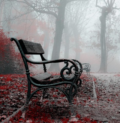 Bench in a misty park