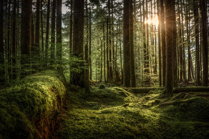 The Forest Floor by AMills - Our Natural Planet Photo Contest
