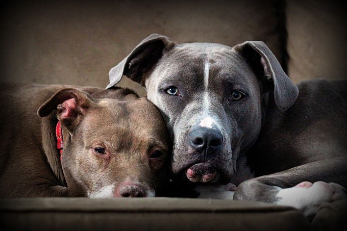 Logan and Harvey by carolcardillo - Pets With Character Photo Contest