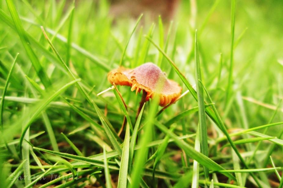 macro mini mushroom