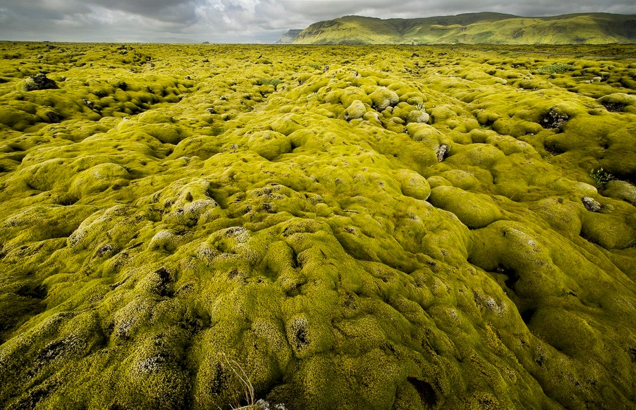 during my trip through iceland i crossed amazing moss landscapes ...one of them is shown on the i...