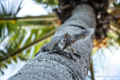Squirrel Can