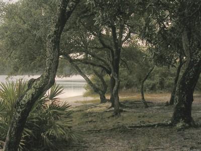 bayou 5596