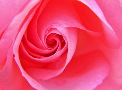 Only a rose.