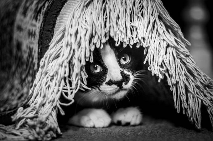 Aslan Hiding by bradleyrussellhamer - Hiding Photo Contest