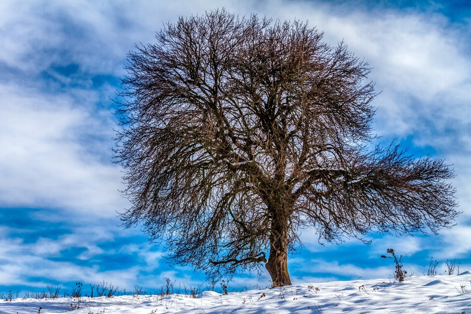 Stunning tree in the winter time with beautiful sky.