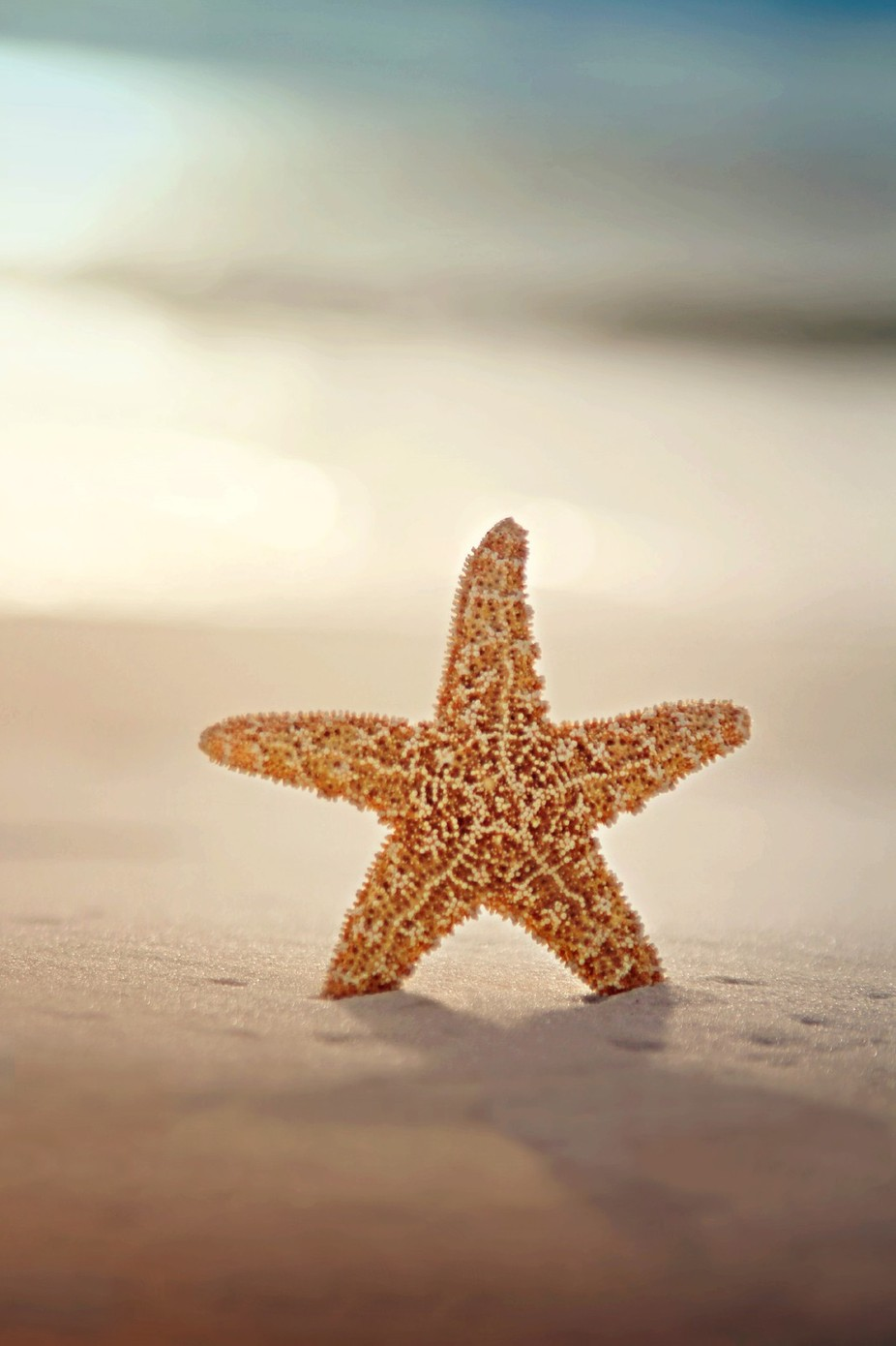 Not all stars belong to the sky by KatieMcKinneyPhotography - Above Or Below Photo Contest
