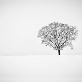 Lone tree in a winter black and white landscape.