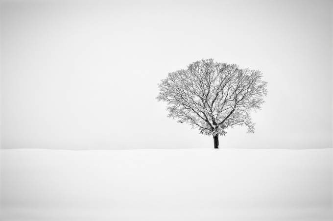 Alone... by EduardMoldoveanu - Black And White Compositions Photo Contest