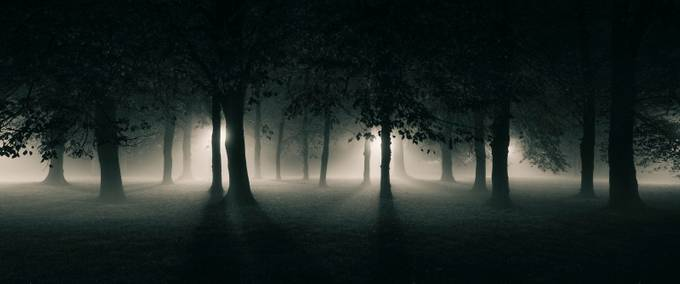 Eaton Park Tree Line 14/11/14 by mushroomgodmat - Lost In The Fog Photo Contest