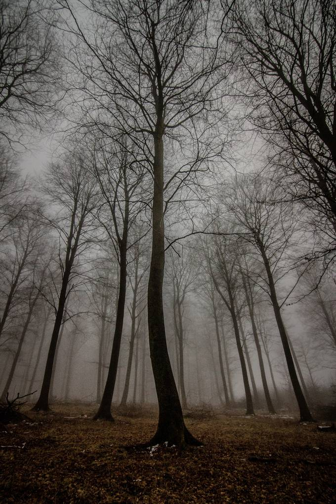 Trees in the mist by mbernholdt - Lost In The Fog Photo Contest