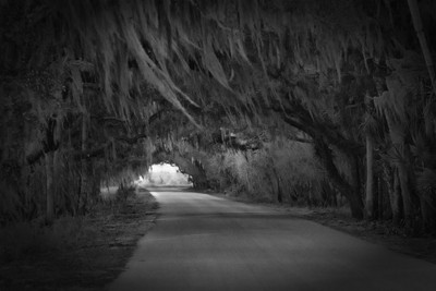 A tunnel through the spanish moss.