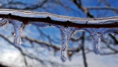 Ice Cycles small limb