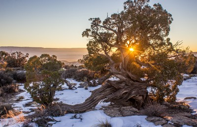 Wood In Nature: Photo Contest Winner
