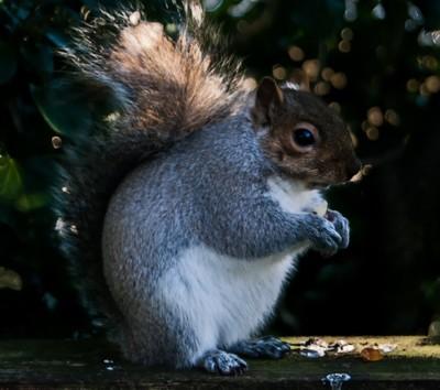 Squirrel Day