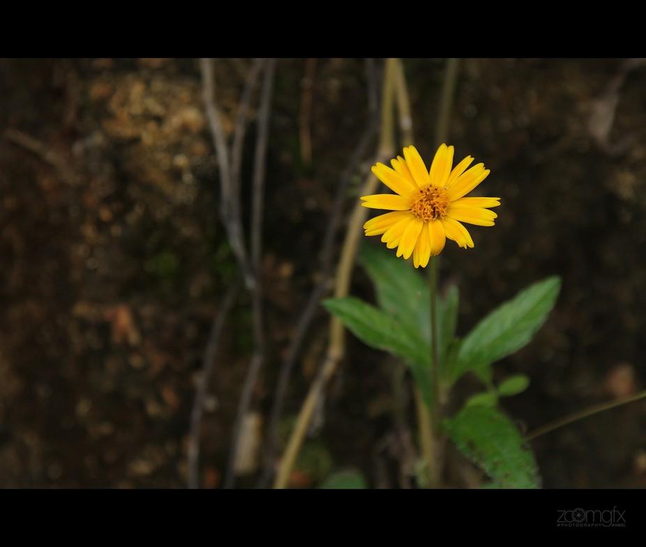 A small little pretty yellow flower.