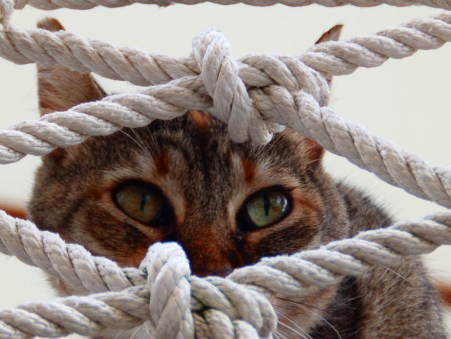 Le chat malin