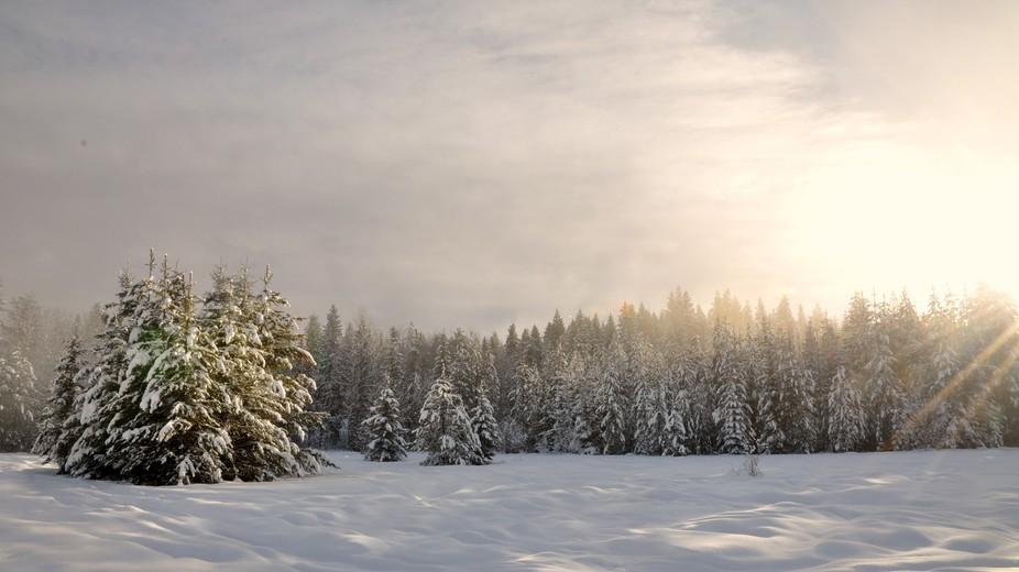 Winter\'s Battle