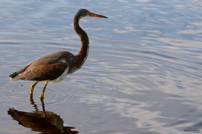 Myakka River State Park, Sarasota Florida