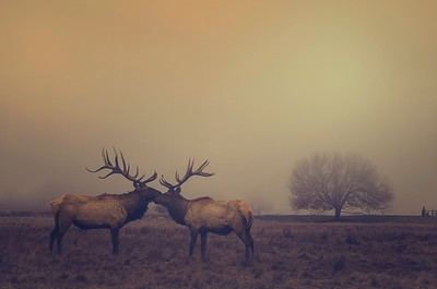 The Lost In The Fog Photo Contest Winners Announced