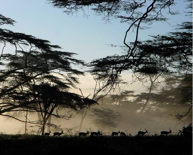 Impalas in the Mist by NairobiGirl - Mist And Drizzle Photo Contest