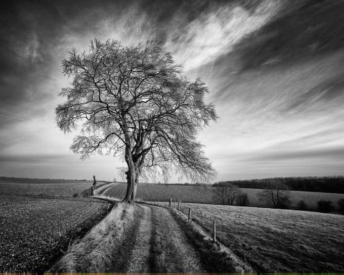 Tree by SteveCheetham - Meadows Photo Contest