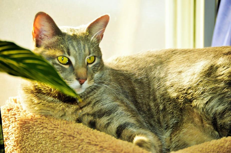 My roommates cat, Hapi  Framed by the plant.   Nikon 3200 Digital