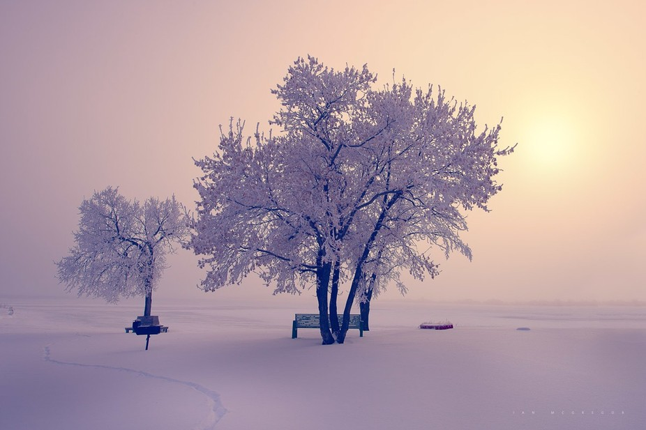 A blanket of fog masks the early sun over this park. Winter Beauty 590412  ** Awarded Editor\'s Ch...