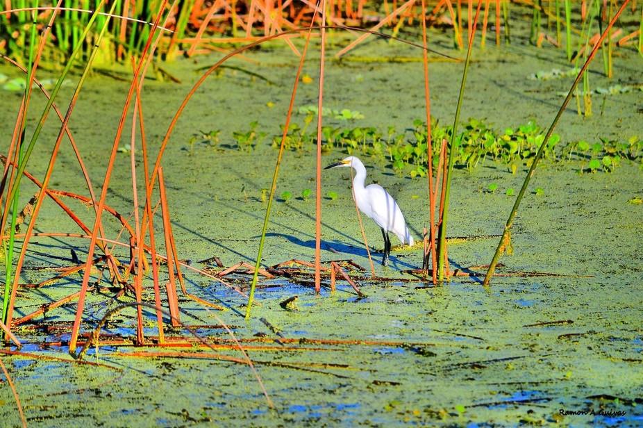 wetlands Florida
