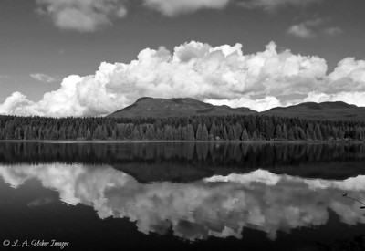 Duck Lake in B & W