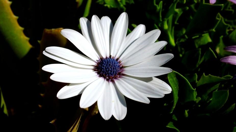 White & Purple flower