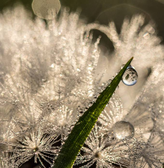 Sparkle by sharischultzmccollough - Magical Light Photo Contest